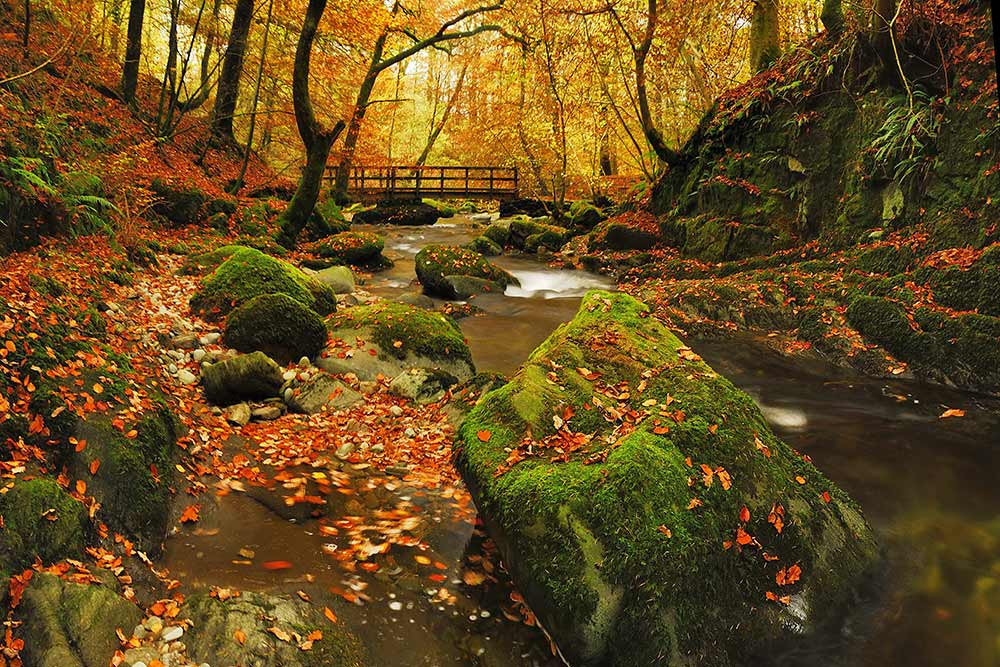 autumn river image